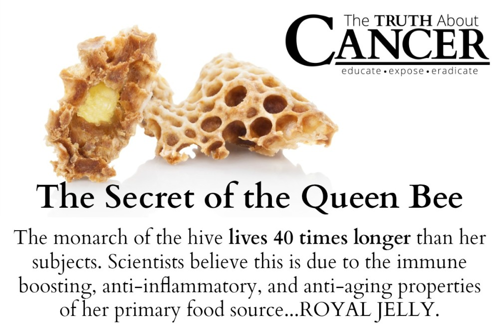 TTAC-Royal-Jelly-Graphic