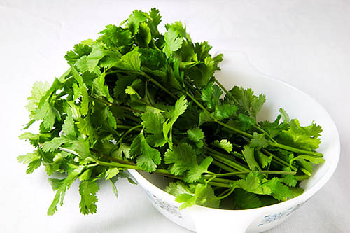 Fresh Coriander Leaves in a White Dish