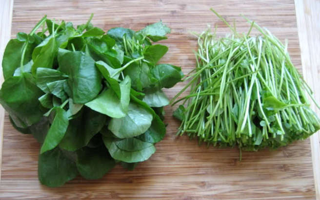 watercress-medium-1